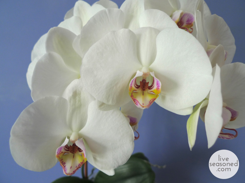 liveseasoned_spring2014_orchid-0b_wm