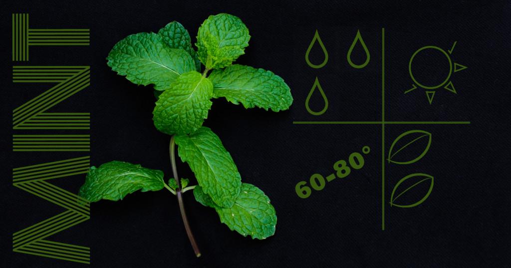 liveseasoned_spring2014_herbs-1