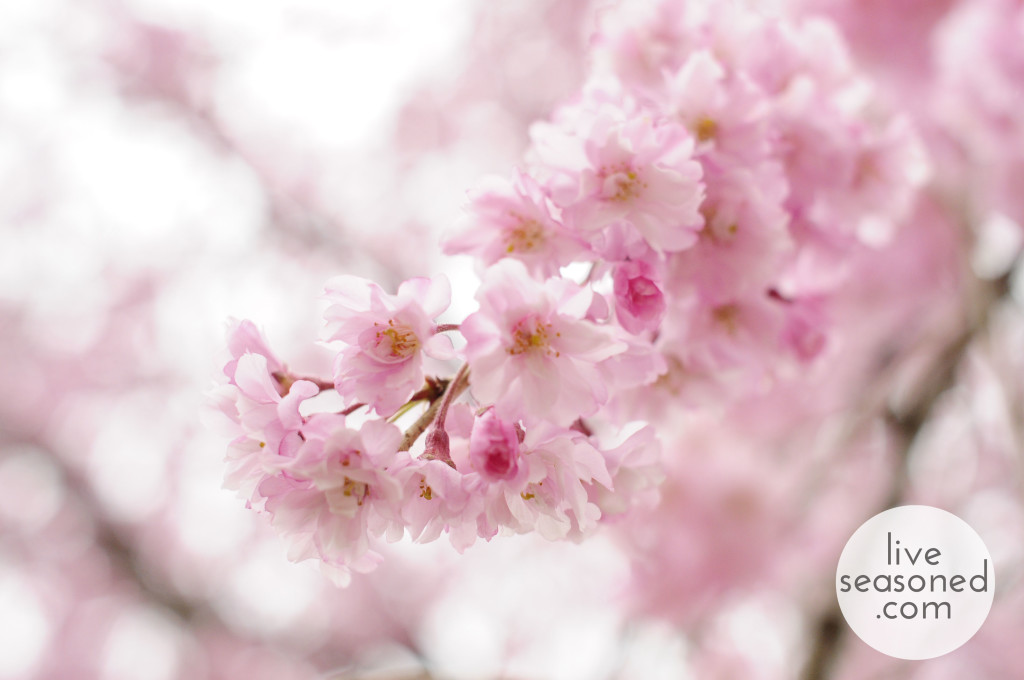liveseasoned_spring2014_welcomeapril_cherryblossom_wm