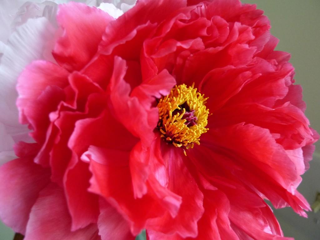 liveseasoned_spring2014_mayview4