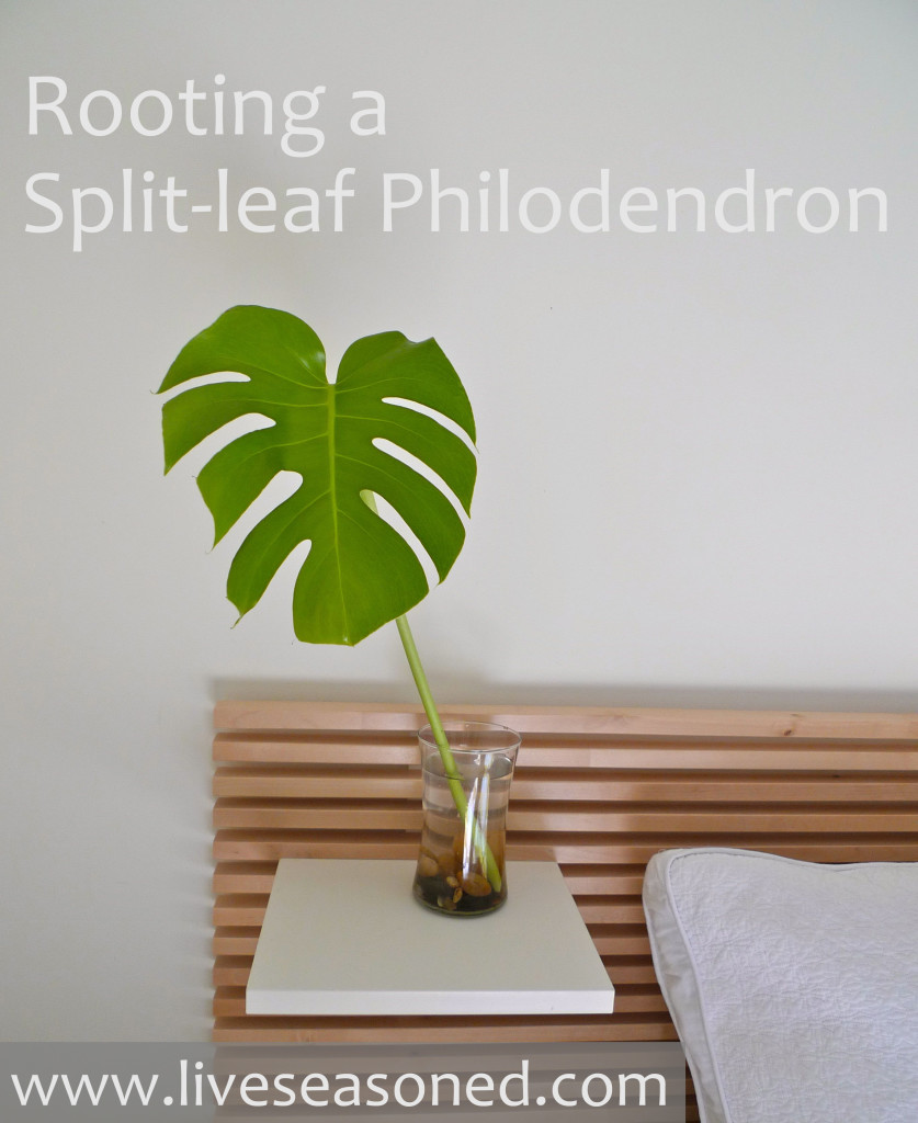 liveseasoned_spring2014_philodendron11b