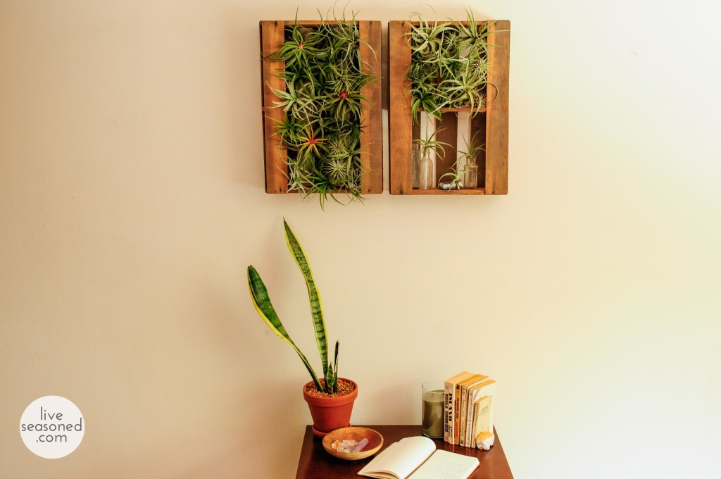 liveseasoned_summer14_airplants-2