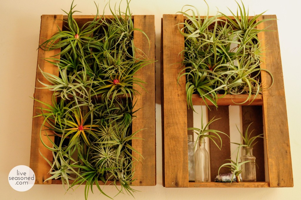 liveseasoned_summer14_airplants-7