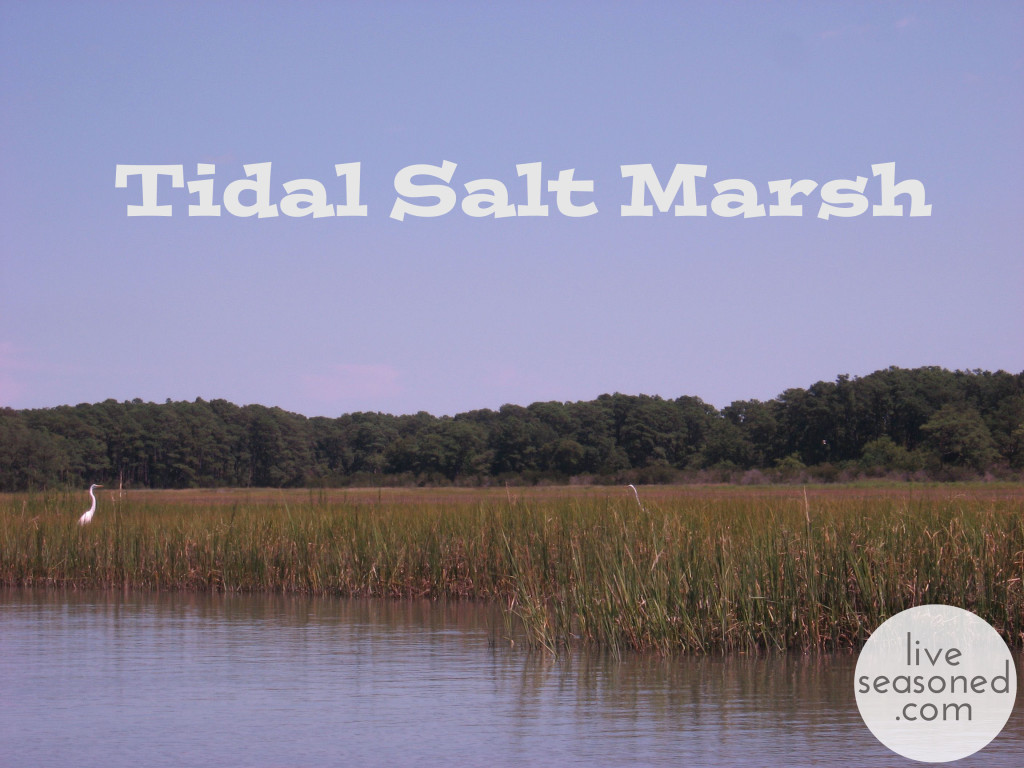 liveseasoned_summer2014_marsh_title