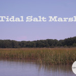 Ecosystem Profile : Tidal Salt Marsh