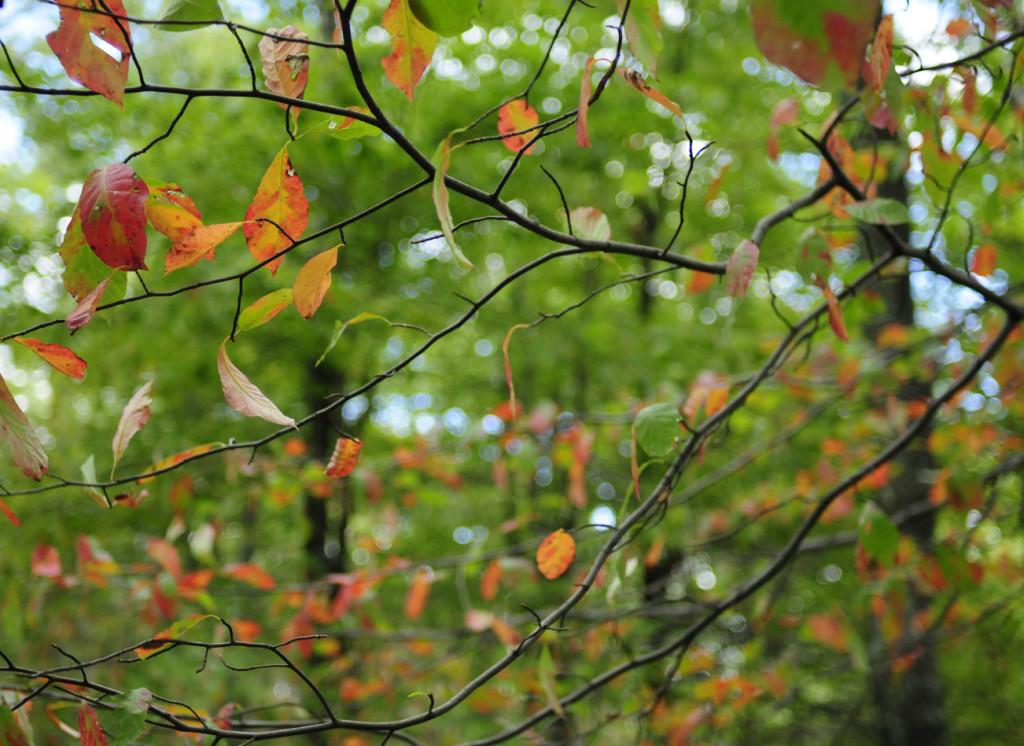 liveseasoned_fall14_seasonedview2