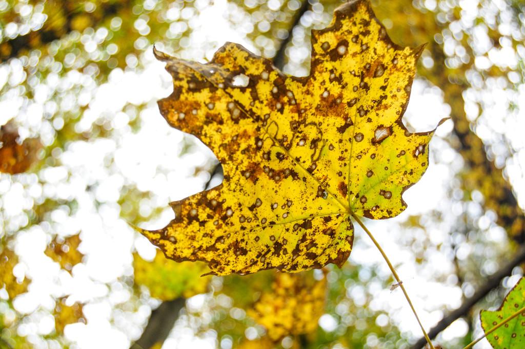 liveseasoned_fall14_seasonedview-3
