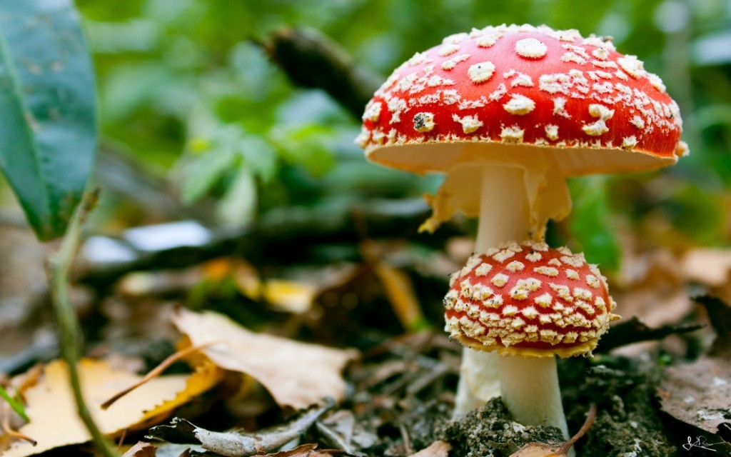 mushrooms-fungus_00358422