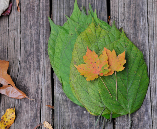 liveseasoned_fall14_leafgarland-1