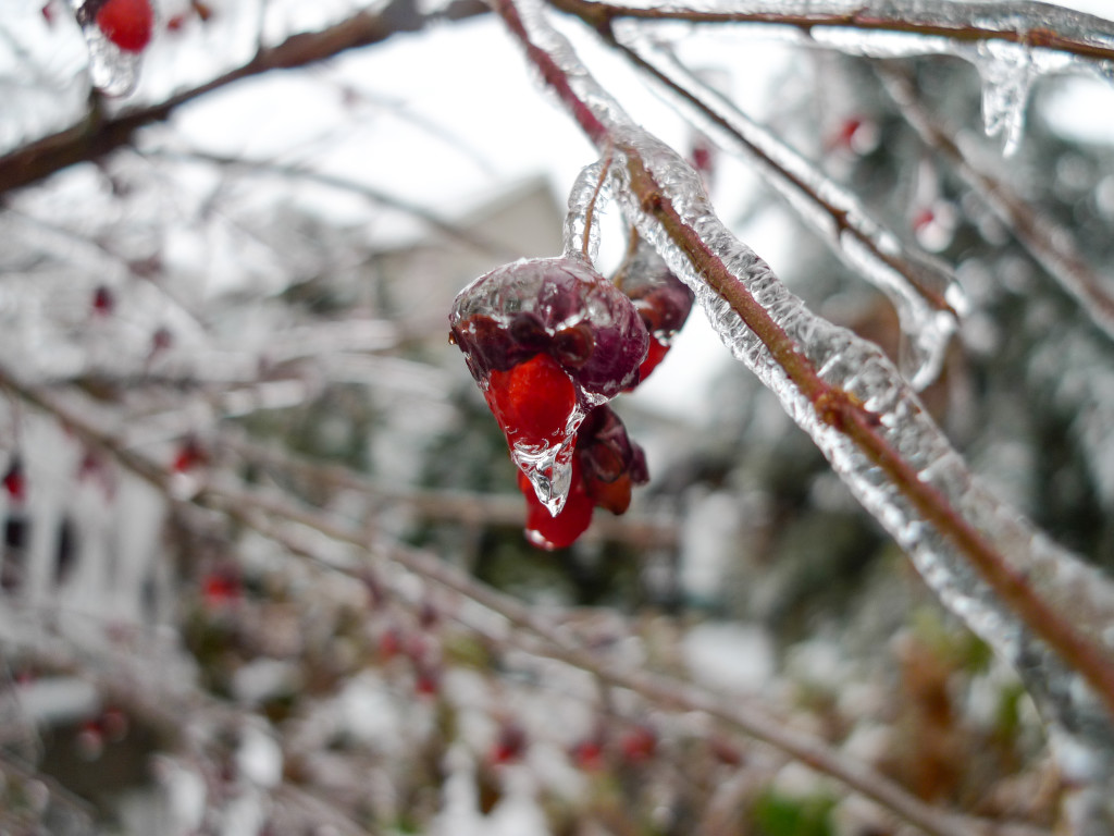liveseasoned_winter14_seasonedview-1
