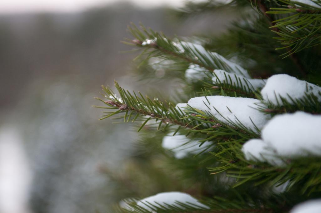 liveseasoned_winter14_seasonedview-1-2