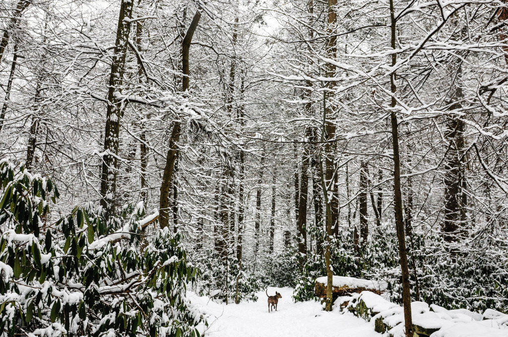 liveseasoned_winter14_seasonedview10-1-2