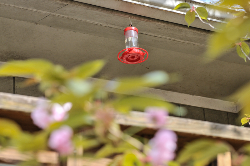 liveseasoned_sp15_hummingbirdfeeder-11
