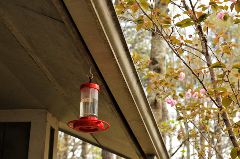 liveseasoned_sp15_hummingbirdfeeder-8