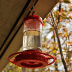 How To: Fill and Hang a Hummingbird Feeder