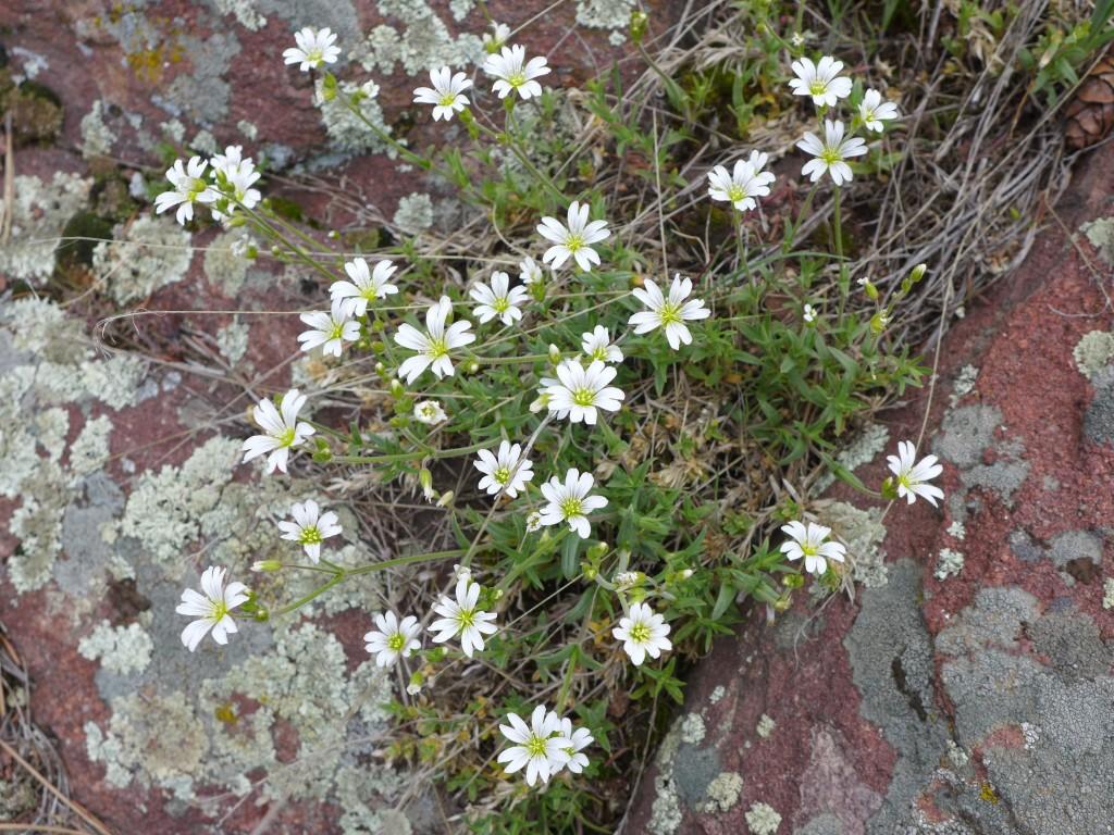 liveseasoned_spring2015_mayview3