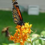 Pollinator Week!