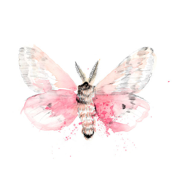 pink moth