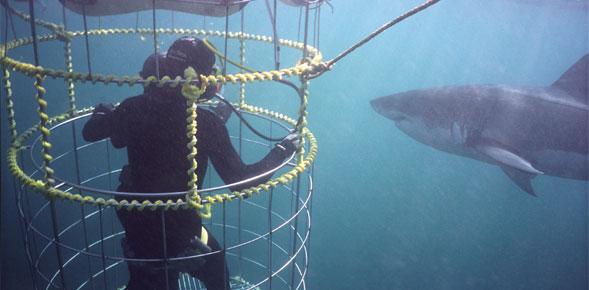 shark_tourism