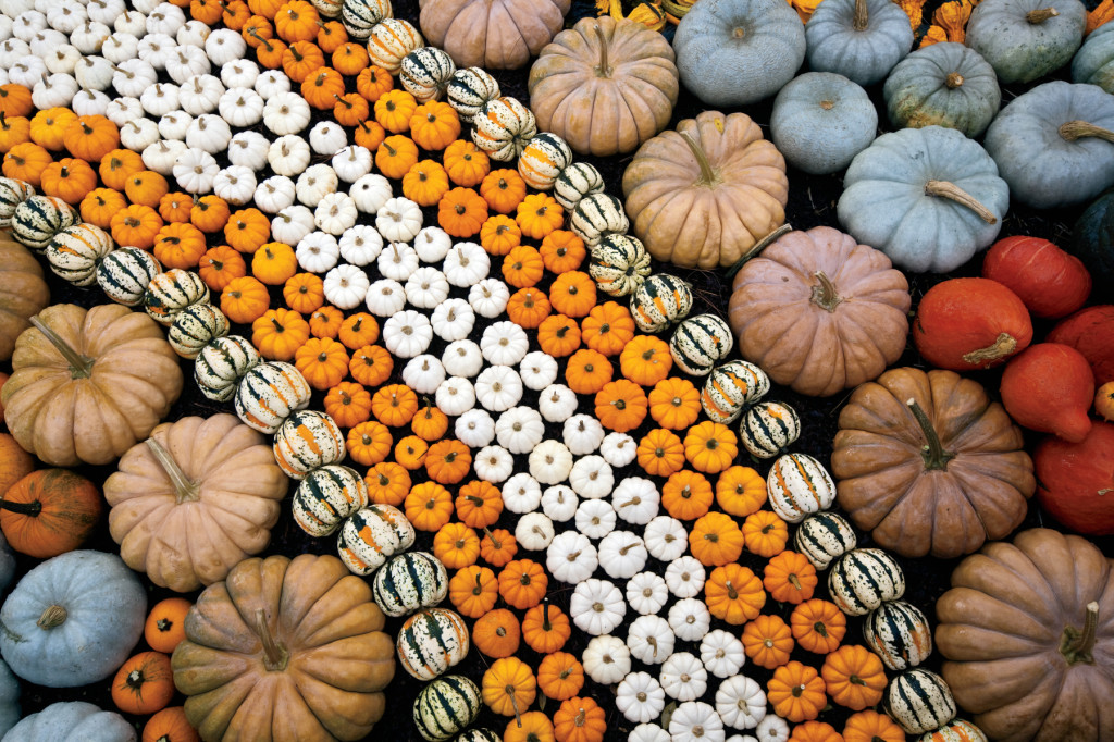 Pumpkin Harvest Display