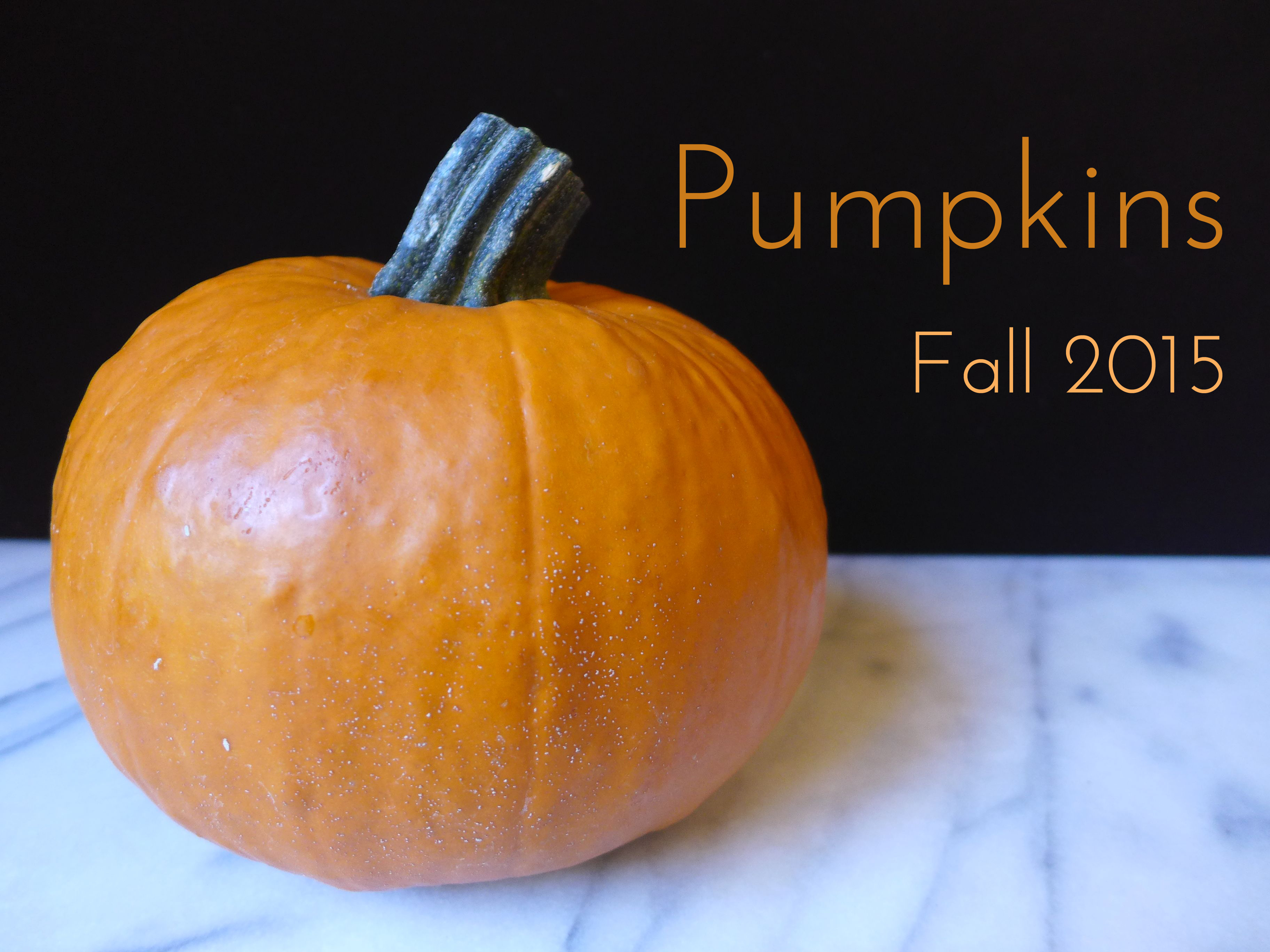 Fall 2015 : Pumpkin
