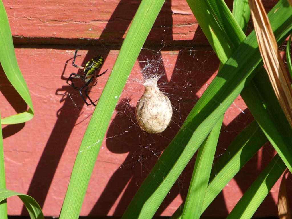 liveseasoned_summer2015_spider1