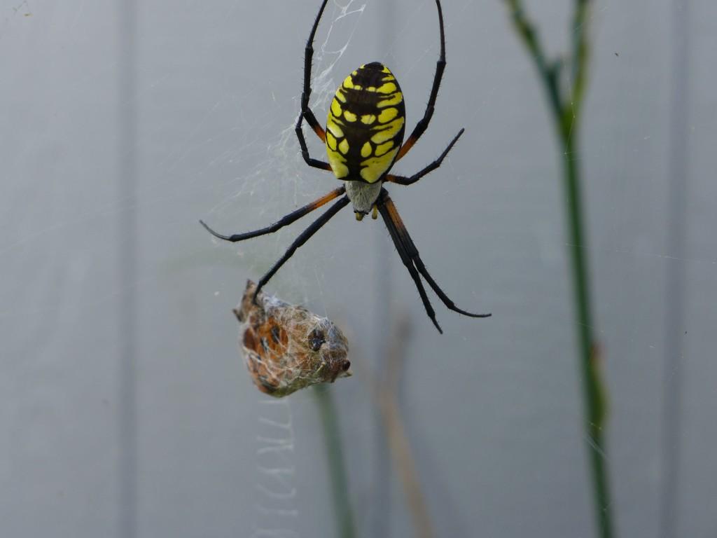liveseasoned_summer2015_spider2