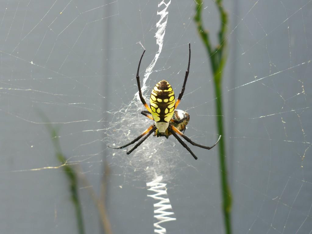 liveseasoned_summer2015_spider3
