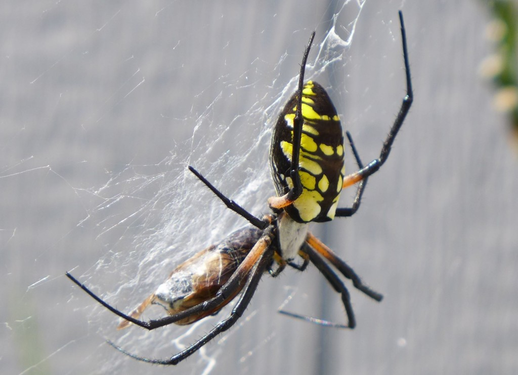 liveseasoned_summer2015_spider8