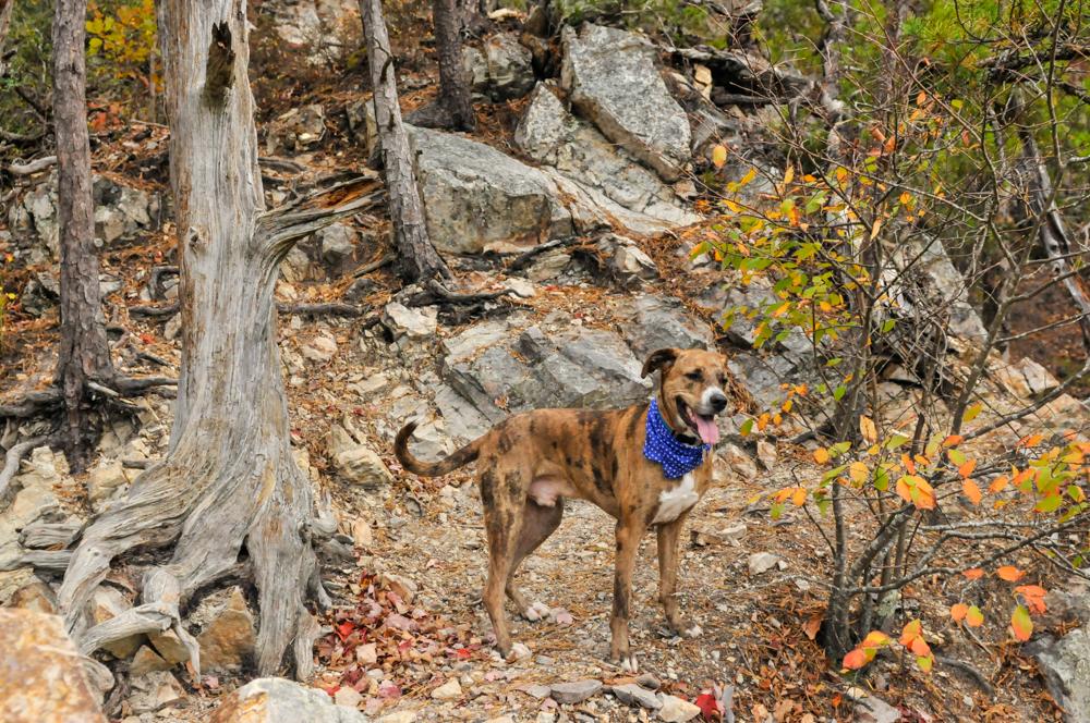 liveseasoned fall15 welcome november hiking-1
