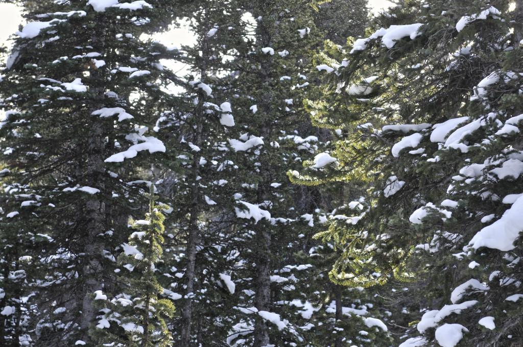 liveseasoned_winter16_seasoned view5