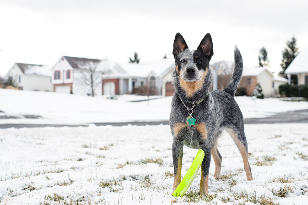 live seasoned winter15 how to photograph pets-2-2