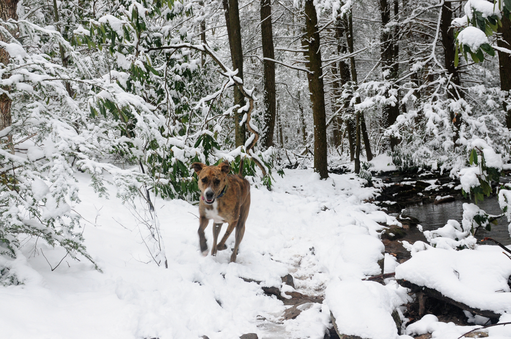 live seasoned winter15 how to photograph pets-35
