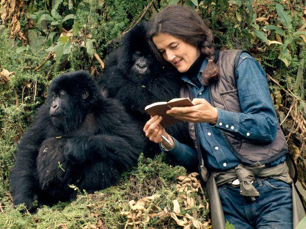 dian-fossey-mountain-gorillas_44342_600x450