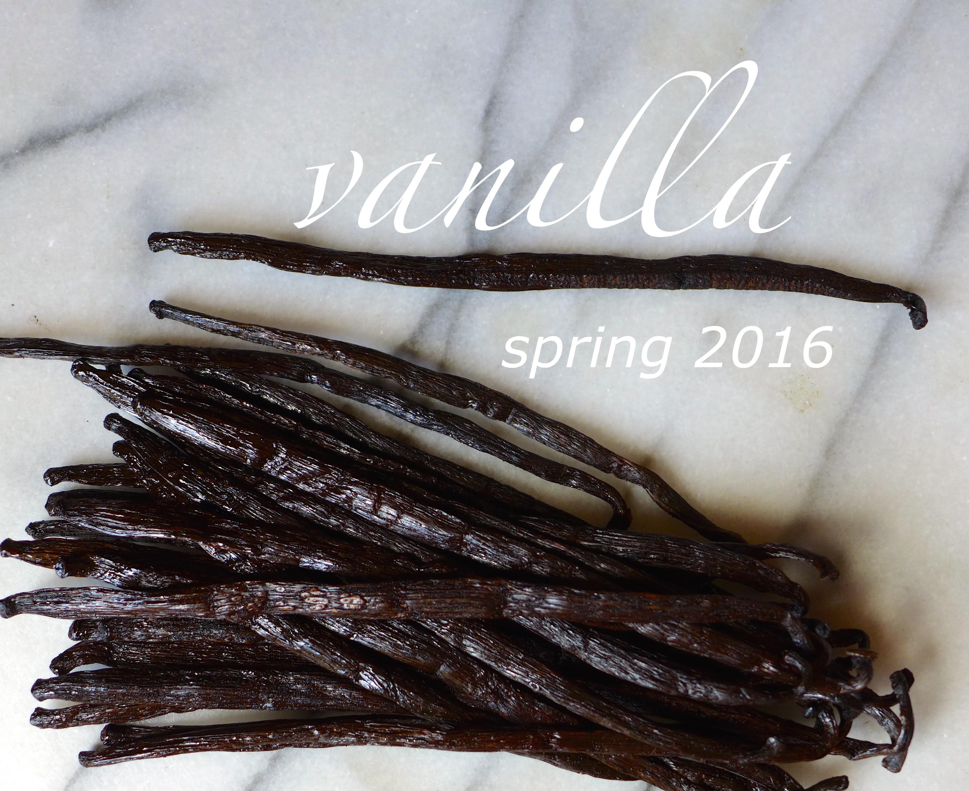 Spring 2016 : Vanilla