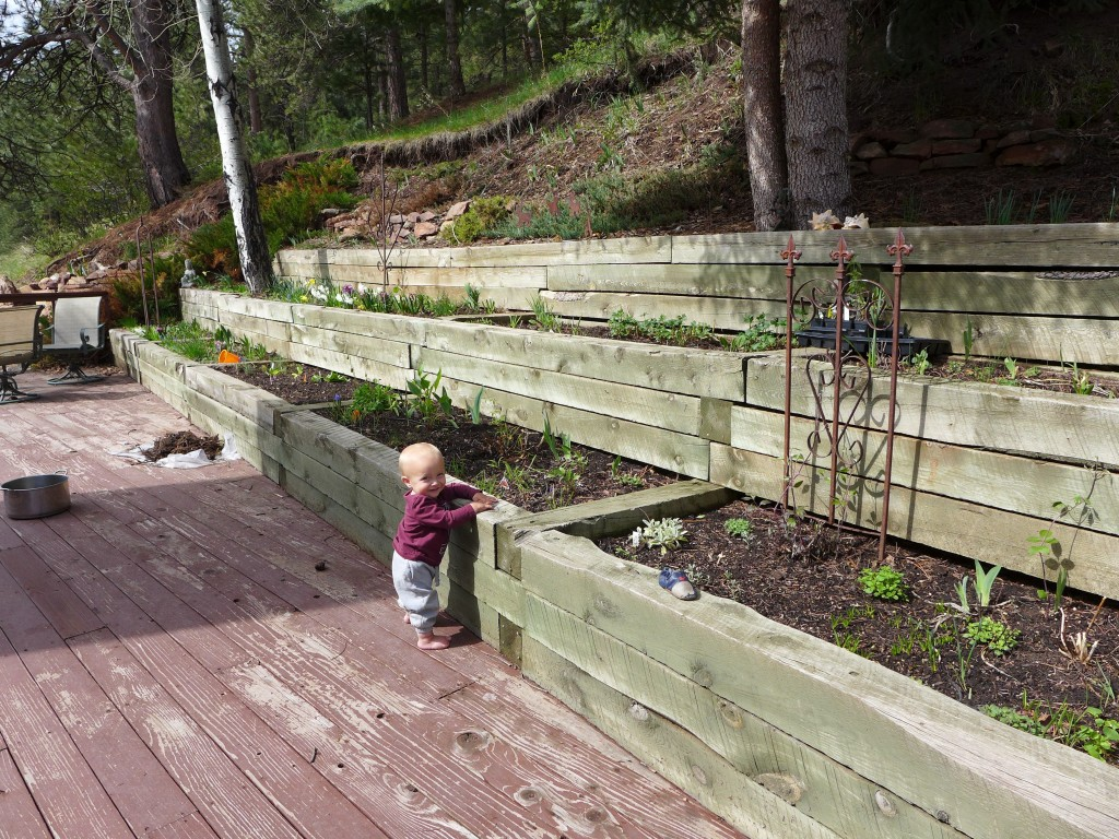 liveseasoned_spring2016_garden11