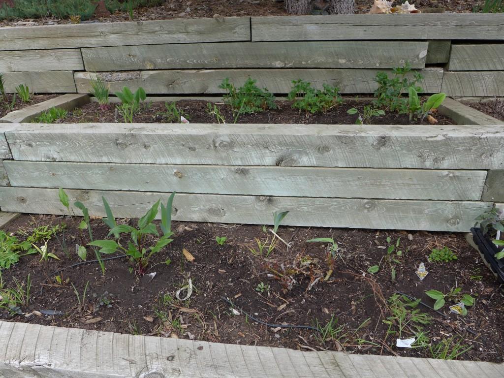 liveseasoned_spring2016_garden3