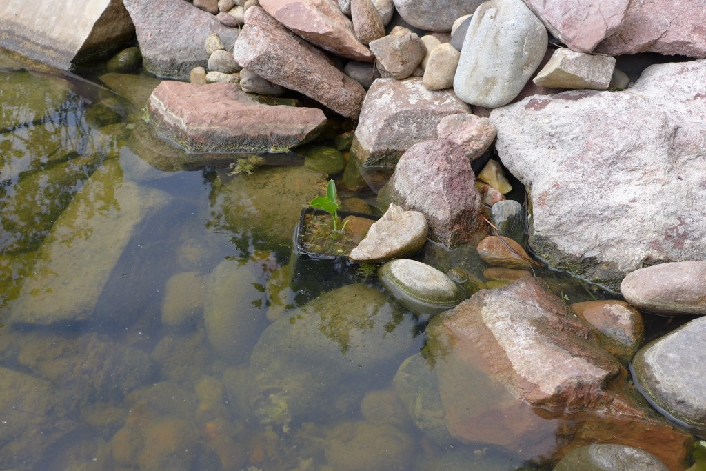 pond - 1 (1)