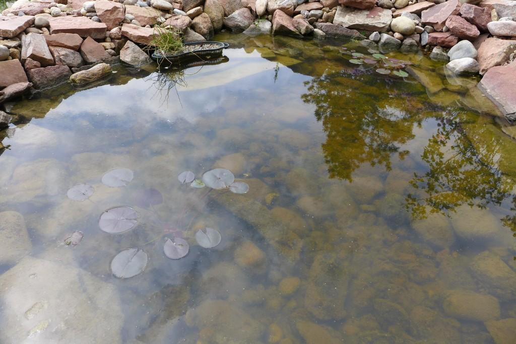 pond - 1 (2)