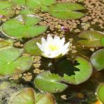 Garden & Pond Update