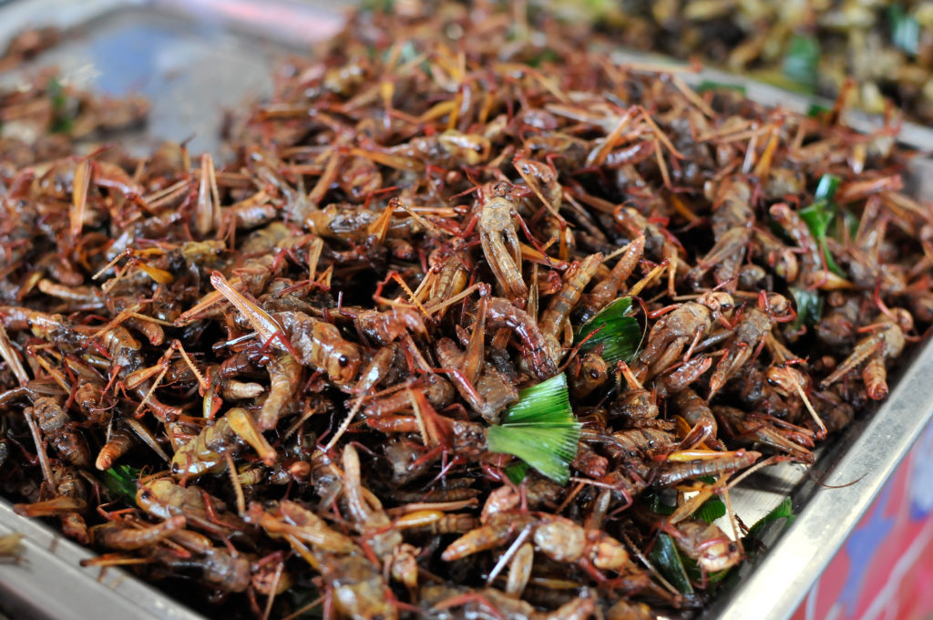 liveseasoned eat insects thailand-3