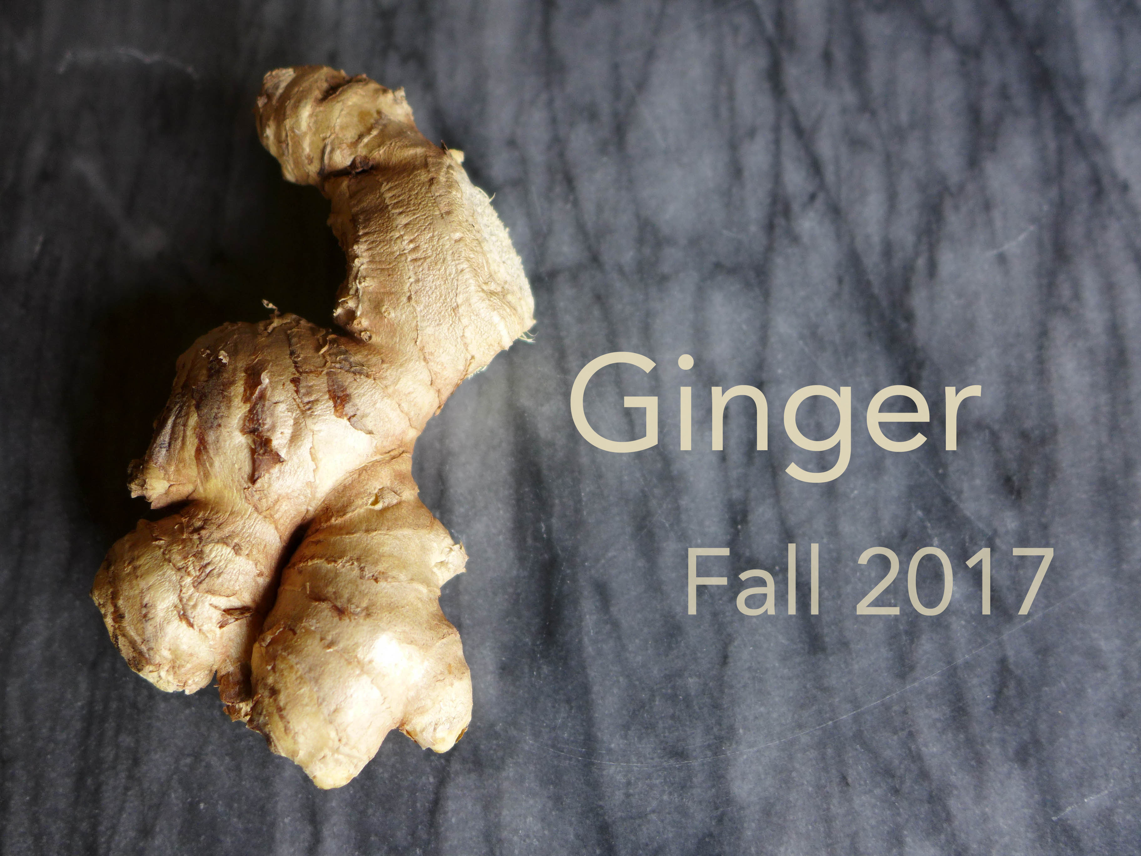 Fall 2017 : Ginger