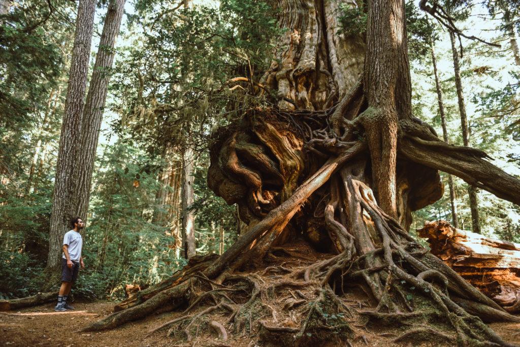 big cedar-6