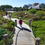 Field Trip : Botanic Gardens