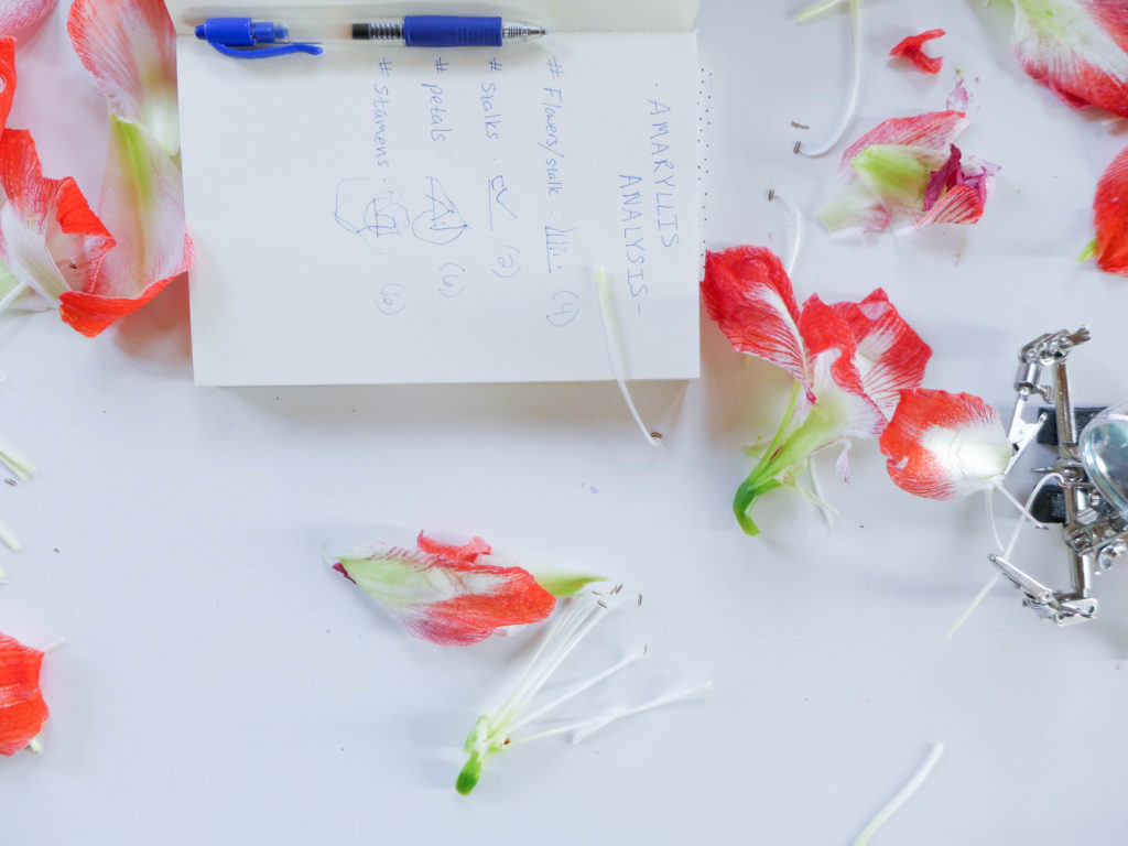 flower_dissection10