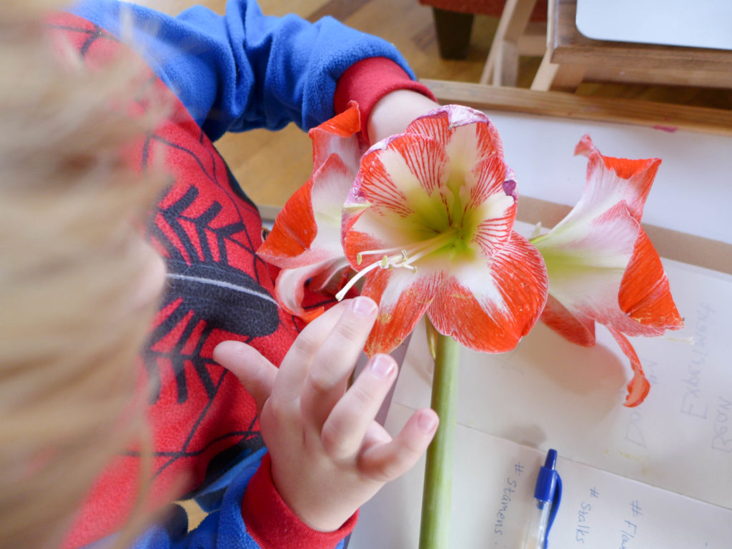 flower_dissection3
